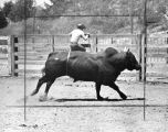 Newhall Rodeo, riders better than ever