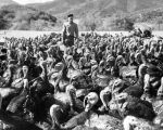 Turkeys by thousands grow on ranch for Valley dinners