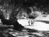 "David Fraser and Alice and Helen Flint by ""Oak of Golden Dreams"" in Placerita Canyon Park"