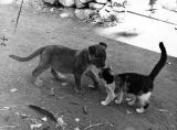 'Mighty,' a calico cat, greets 'Zamba III,' a mountain lion