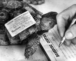 Clem, the turtle, gets checked in at pet boarding house