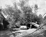 Trees damage cars