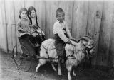 Children on goat cart