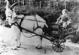Child in goat cart