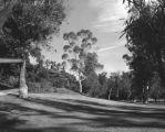 Scenic view of Elysian Park