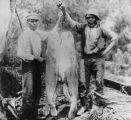 Fishermen with oversized catch