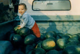 Young man in watermelon truck
