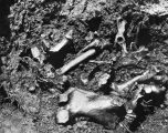 Bones found in the tar pit