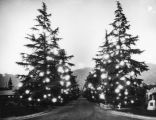 Altadena's Christmas Tree Lane