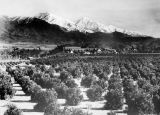 Orange groves and mountains
