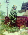 Harry Burnett waving from the top of a sunflower in the yard at Turnabout House, the residence of...
