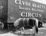 A Clyde Beatty Trained Wild Animal Circus car, with horse nearby, in town in 1946.